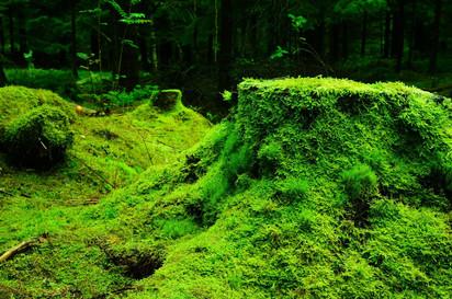 Super Moss!