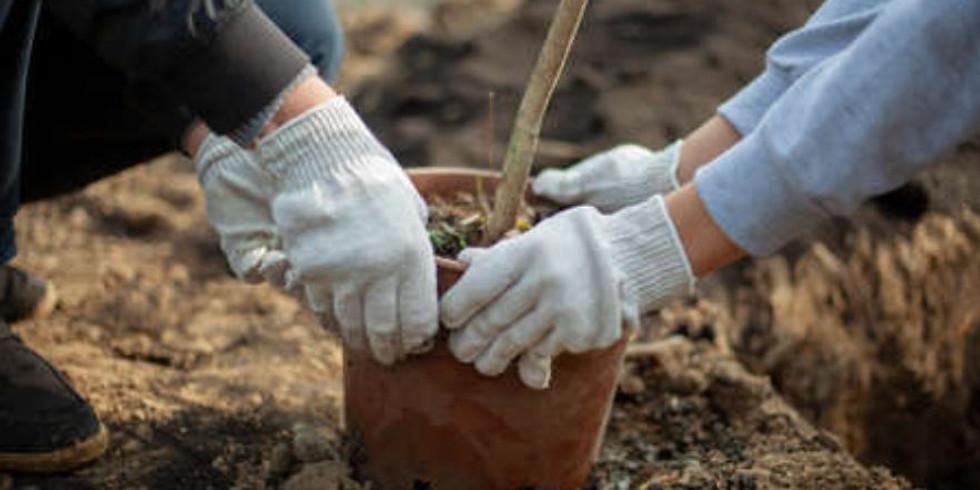 100K Trees Tree Planting with ARPD - Nov. 2020