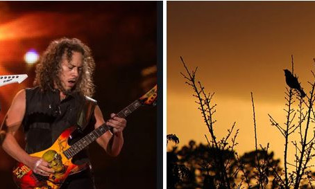 Metallica, Birds, Noise & COVID-19