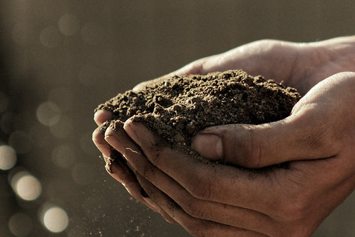 Microgreen Compost