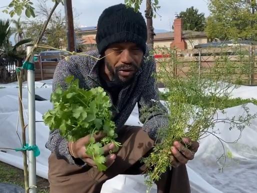 Herb Profile: Cilantro aka Coriander
