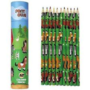 Pony Club Colouring Pencils