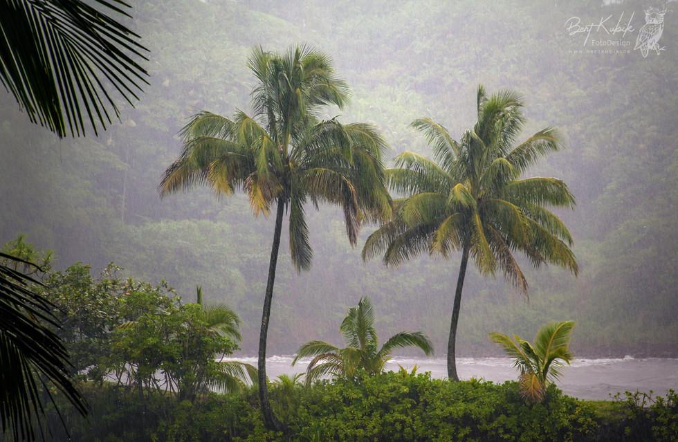Hilo Tropical Gardens auf Big Island