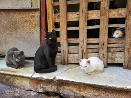 """""""Katzen-Meeting"""""""