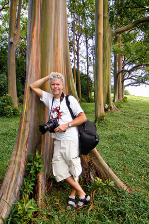 An den Rainbow Eukalyptus Bäumen