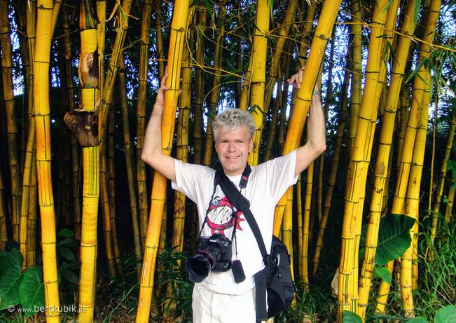 Bambus-Porträt
