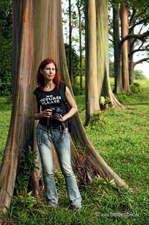 Erinnerungs-Fotos an Rainbow-Eukalyptus-Bäumen