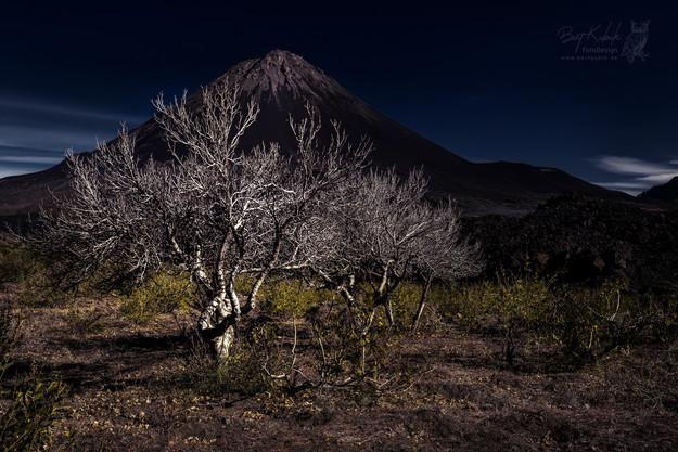 Mystischer Feigenbaum