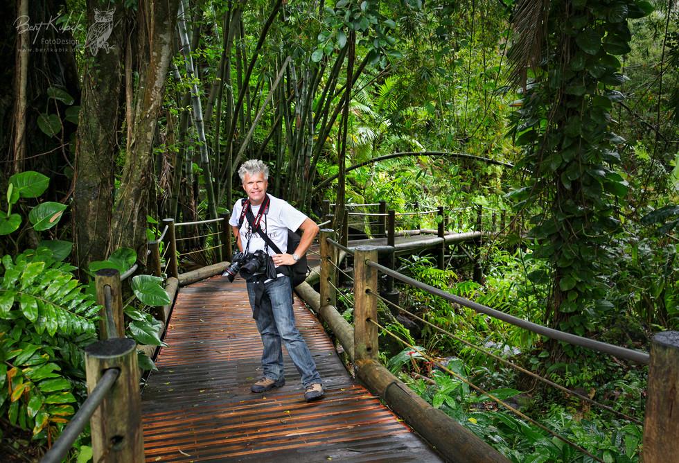 Tropical Garten bei Hilo