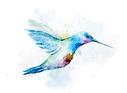 hummingbird6.png