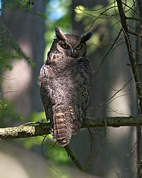 owl_1954271.jpg