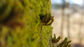 Innere Ruhe durch Natur-Fotografie  Was heisst das für mich?