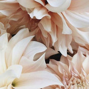 flowers_Insta.jpg
