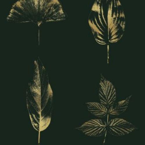 Leaves_Insta.jpg