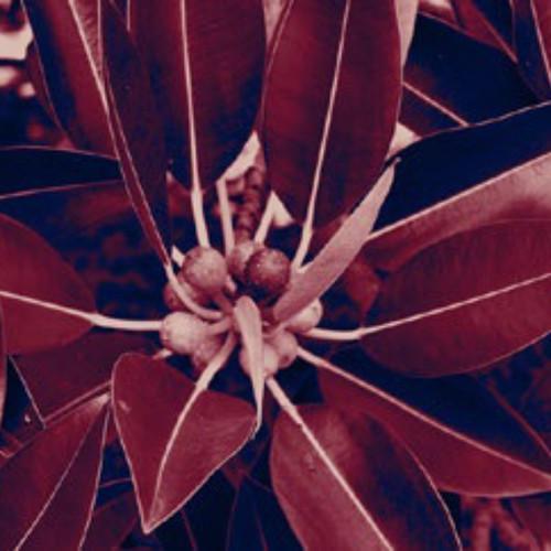 red leaf_Insta.jpg