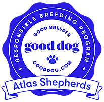 atlas-shepherds-badge.png