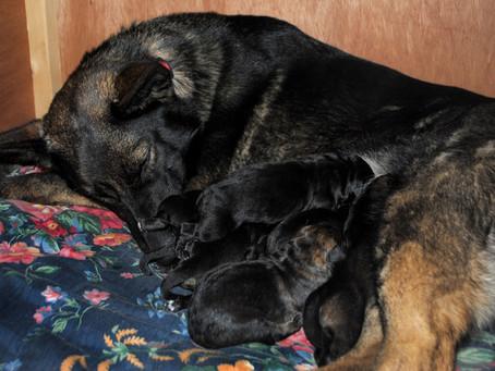 Seven Beautiful Pups!