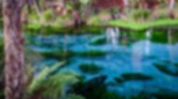 blue springs3.jpg