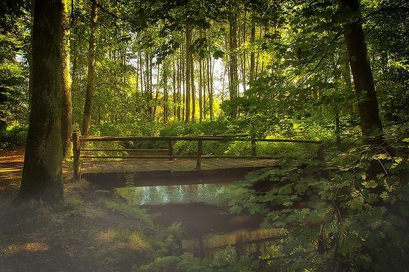 bridge-641427_1280.jpg