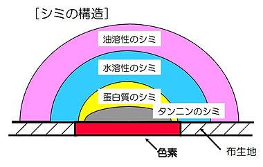 シミの構造