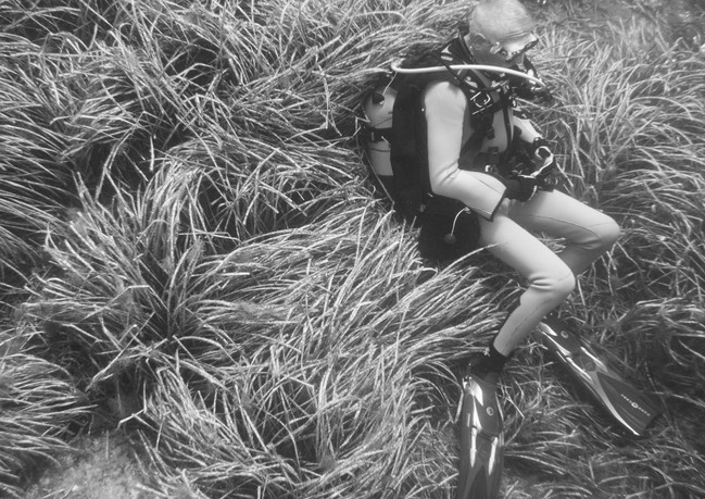 Smothered in Sea Grass.jpg