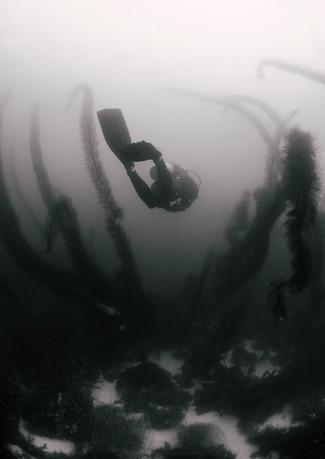 A Mermaids Haven