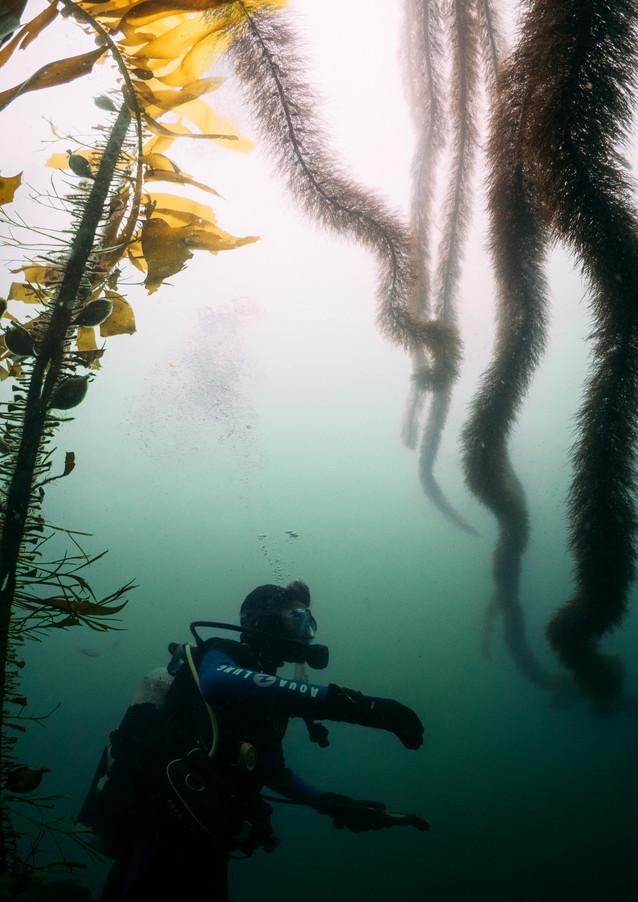 Dancing with Kelp