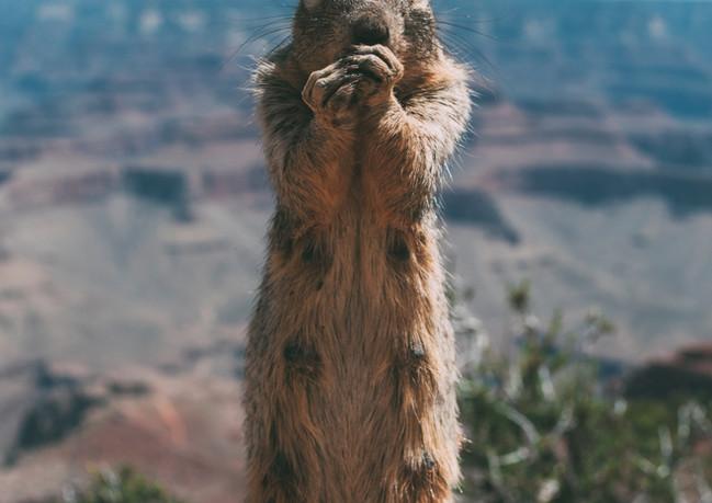Squirrel Grand Canyon.jpg