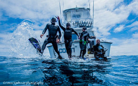 Blue Shark Expedition with Amos Nachoum