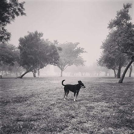 דוד פייבריש שחור לבן.jpg