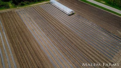 Malem Farms - 2.jpg