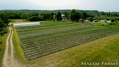 Malem Farms - 5.jpg
