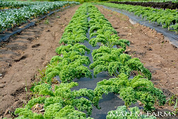 Malem Farms - 4.jpg