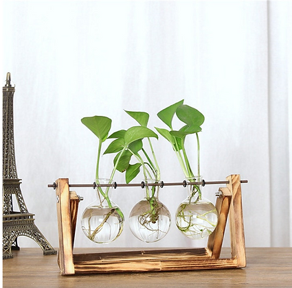 Unique Glass and Wood Plant Holder