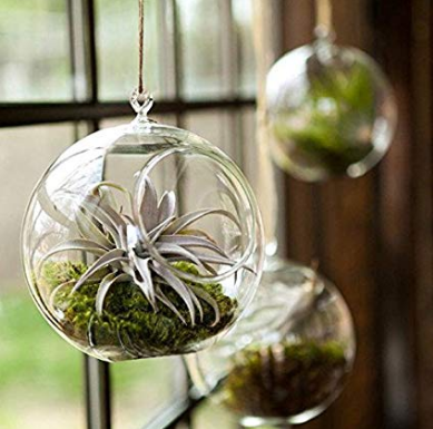 Terrarium Flower Glass Hanging Vase