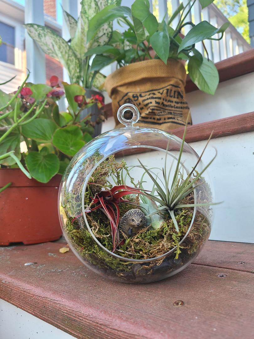 Week 5: Woah Naturale Terrariums