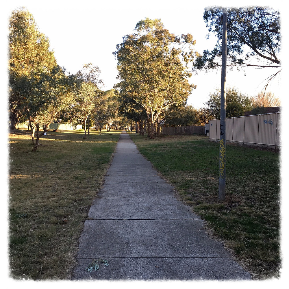 View of my walk, path and trees, original clear photo