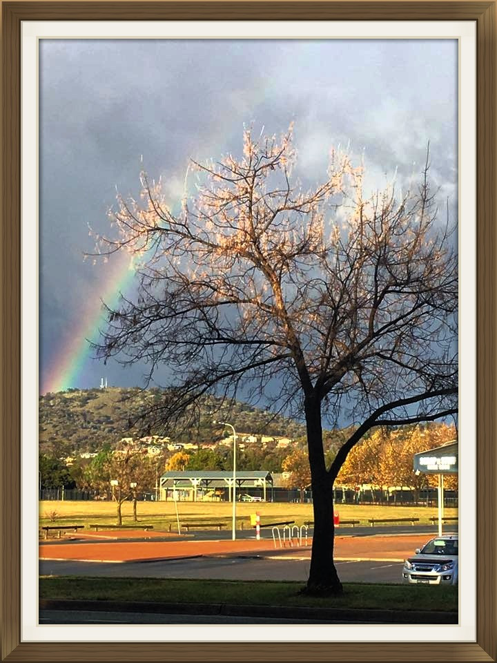 Rainbow behind a tree, silver truck in view