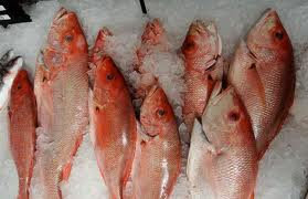 Red Snapper/Pargo Whole approx 2lbs