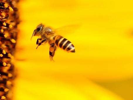 """Zimmer frei! Über Insektenhäuser oder """"Bienenhotels"""""""