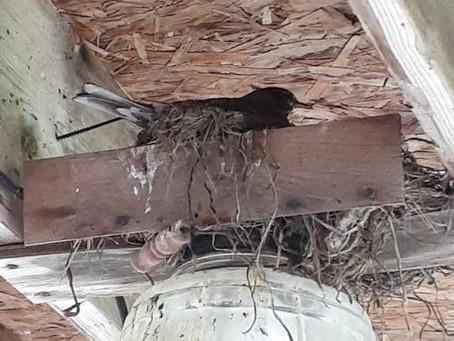 Bird Invasion Reported