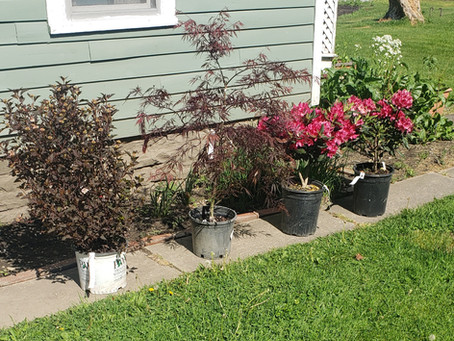 Village Tree and Shrub Initiative Completed