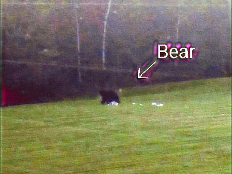 Hungry Bear Don't Care