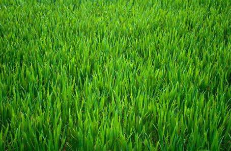 Public Service Announcement: Don't be a Jerk (Lawn Mowing Edition)