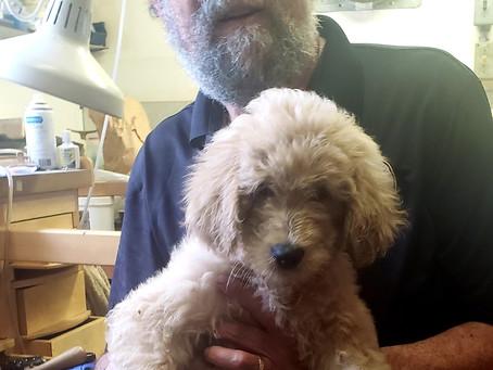 Steve Got a New Puppy