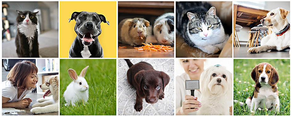 Valley Vets pets