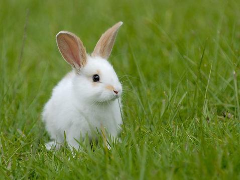 Valley Vets Rabbit advice