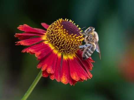 Macro competition