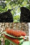 flora fauna.jpg
