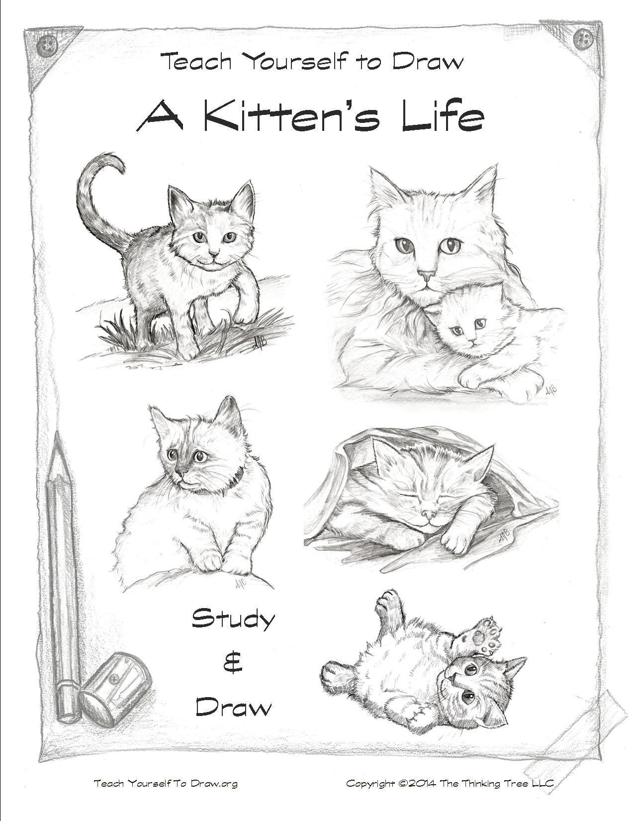 Kittens to Study and Draw